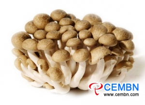 Shandong Luozhuang Vegetable Market: Analysis of Mushroom Price