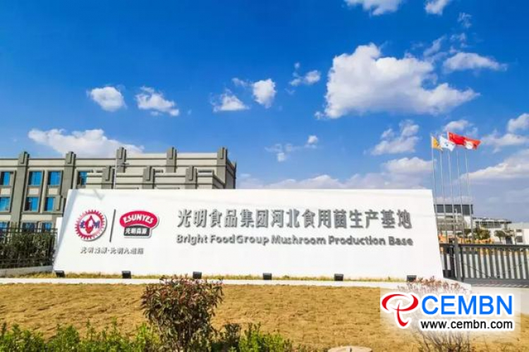 446,700 tons of fresh mushrooms gush into US market from Hebei Province, China