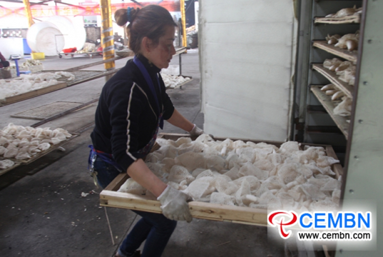 Bamboo fungus growing shines as a characteristic industry