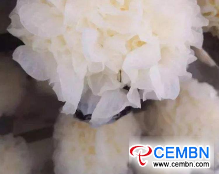 Smart factory yields superior White fungi