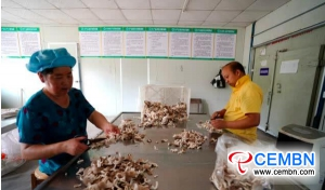 Abalone mushrooms produced in this company are at the retail price of 24 CNY per kg