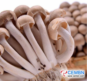 Shanghai Jiangqiao market: analysis of mushroom price