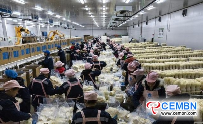 King of Enoki mushroom production in Southwest China enjoys good output and sales