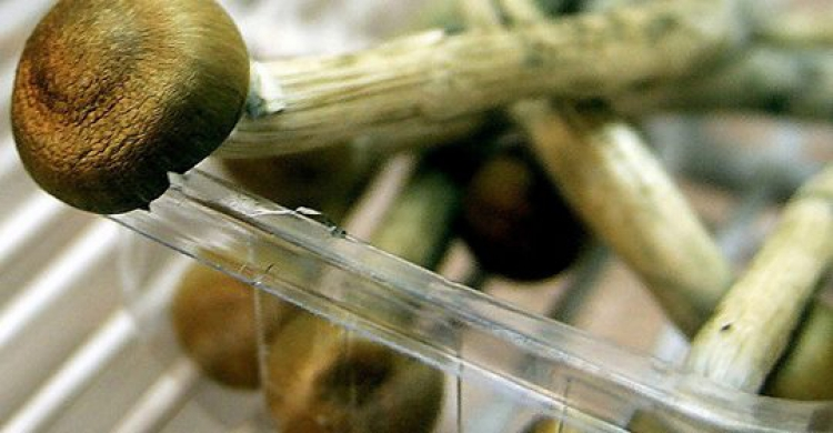 IPO Beckons for Magic Mushroom Research Into Depression