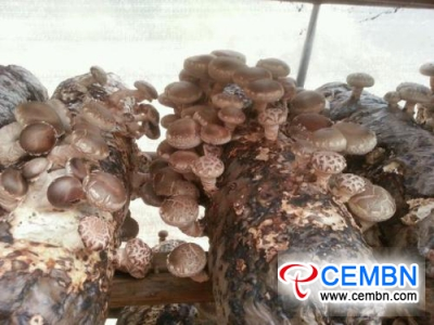 Outlet on China's mushroom deep processing