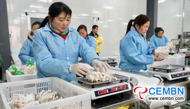 Seafood mushroom production reveals evident economic benefits