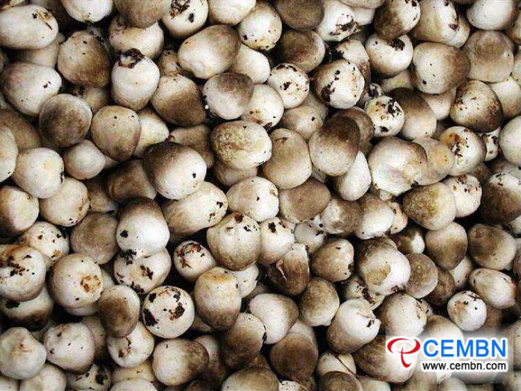 Jiangsu Lingjiatang Market: Analysis of Mushroom Price