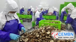 China's Horizon: Growth or decline regarding export of dried mushrooms in first half of 2018?