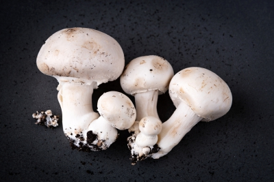'As a mushroom sector to solve our own problems'