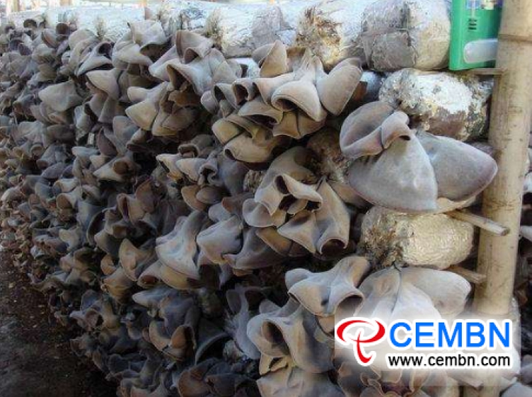 General situation survey of mushroom industry in Henan Province, China