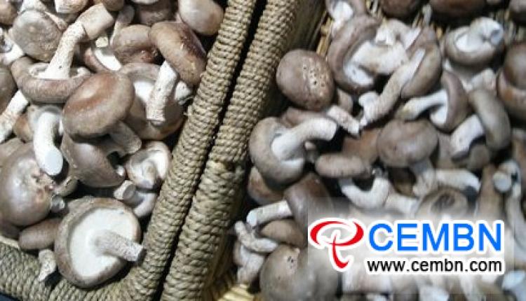 Liaoning Dandong Market: Analysis of Mushroom Price