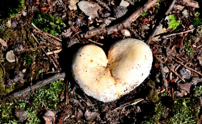 Mushrooming' the future of Mushrooms for Immunity: People and Planet