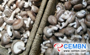 Anhui Fuyang Logistic Center of Agricultural Products: Analysis of Mushroom Price