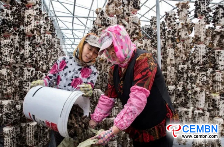Black fungus growing means a prosperous industry