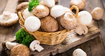 JM Farms Announces New Affiliation With Giorgi Mushroom Co. and Grupo Monteblanco Mb, S.A. De C.V.
