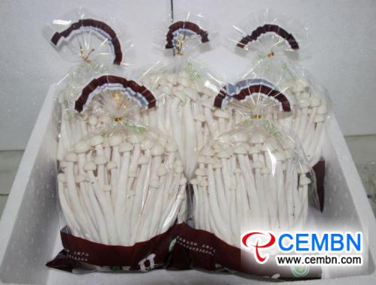 Shanxi Hexi Market: Analysis of Mushroom Price
