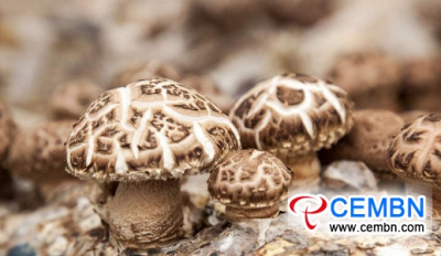 Mushroom project which holds 240 million CNY of fund brings about new hopes