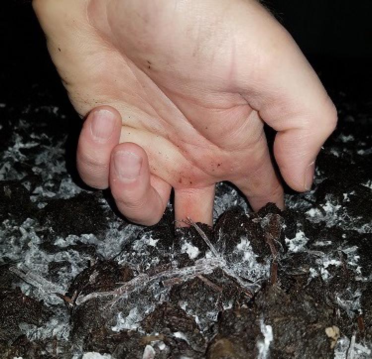 Casing soil