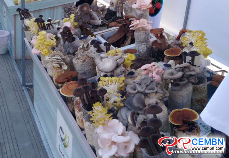 Various mushrooms attract the eyeballs of foreigners